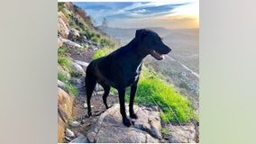 Dog found safe after going missing following crash with owners in northern Arizona