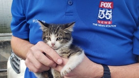 Kitten rescued from under hood of FOX 35 vehicle