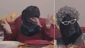 K-9s tell dad jokes, scroll through 'Dogstagram' around Thanksgiving table in funny holiday video