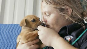 'Unsung hero': Petco Foundation honors woman for bringing shelter kill rate from 100 percent down to 0