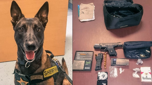 Florida K-9 sniffs out more than 13 grams of meth during traffic stop