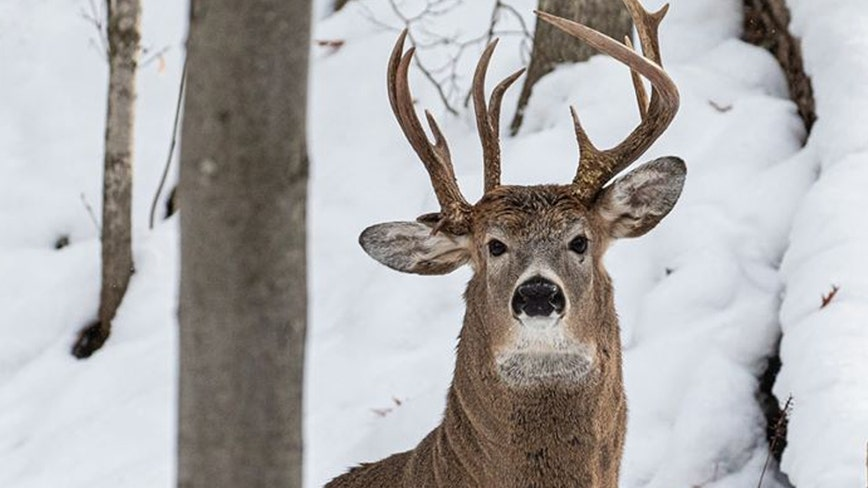 Former Michigan lawmaker captures photo of 'one-in-a-million' 3-antler deer