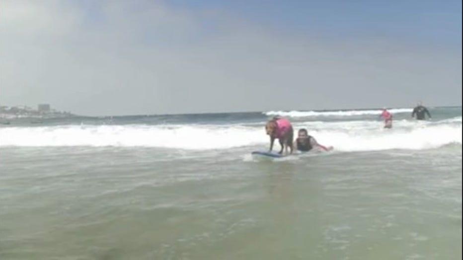 surfing-dog.jpg