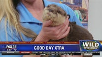 Wild Wednesday: Boris the otter
