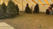 'This tent has never been this empty': Christmas tree shortage impacting businesses