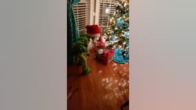 Georgia 'Grinch' steals Christmas along with our hearts