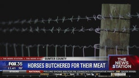 Horses butchered for their meat
