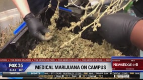 School districts tasked with crafting medical marijuana policies