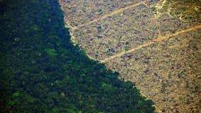 The Amazon has lost the equivalent of 10.3 million football fields to deforestation over past decade