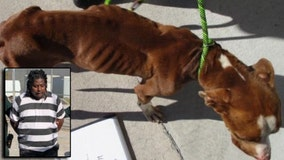 Brevard County man arrested after dog found emaciated