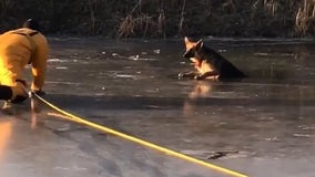 Firefighters work to rescue dog that fell through ice