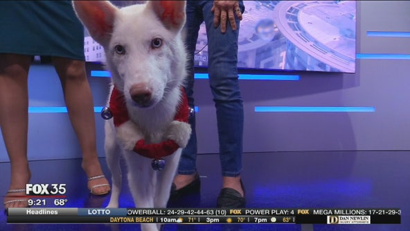 Adopt-a-Pet: Frosty is looking for a home
