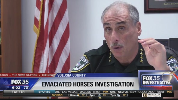 FOX 35 Investigates: Volusia County Sheriff's Office investigating why rescuing emaciated Edgewater horses took so long