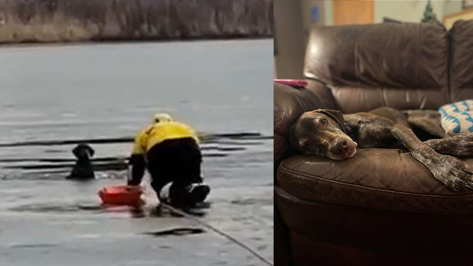 Rollie, the German Shorthaired Pointer, fell into an freezing body of water after she had escaped from her owners car.
