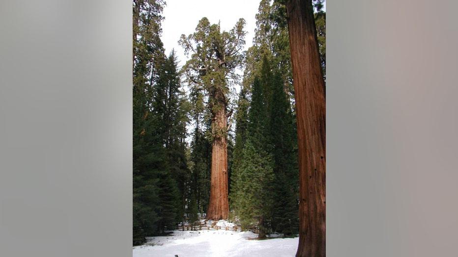 General-Sherman-Tree-the-worlds-largest-living-tree-in-winter.-2010__NPS.jpg