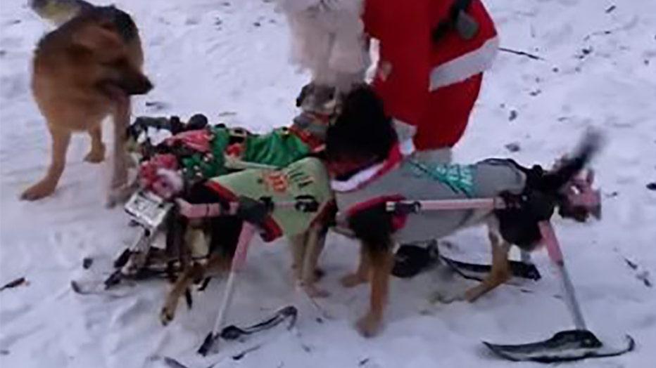 dogs-play-in-snow-THUMB.jpg