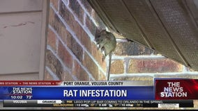 Port Orange neighbors concerned over rat infestation