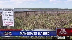 Hundred of mangrove trees slashed
