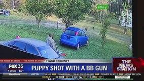 Police say puppy shot with BB gun