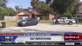 Port Orange code enforcement inspects rat infestation