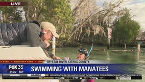David Does It: Swimming with Manatees