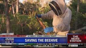Beehive spotted in fallen tree in Altamonte Springs