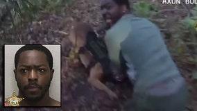 Sheriff: Burglary suspect chokes Florida K-9 during pursuit, dog bites back in the end