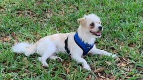 Orlando family searching for dog after surveillance video shows someone taking him