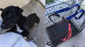 Mama dog found dragging crate filled with her puppies on side of road