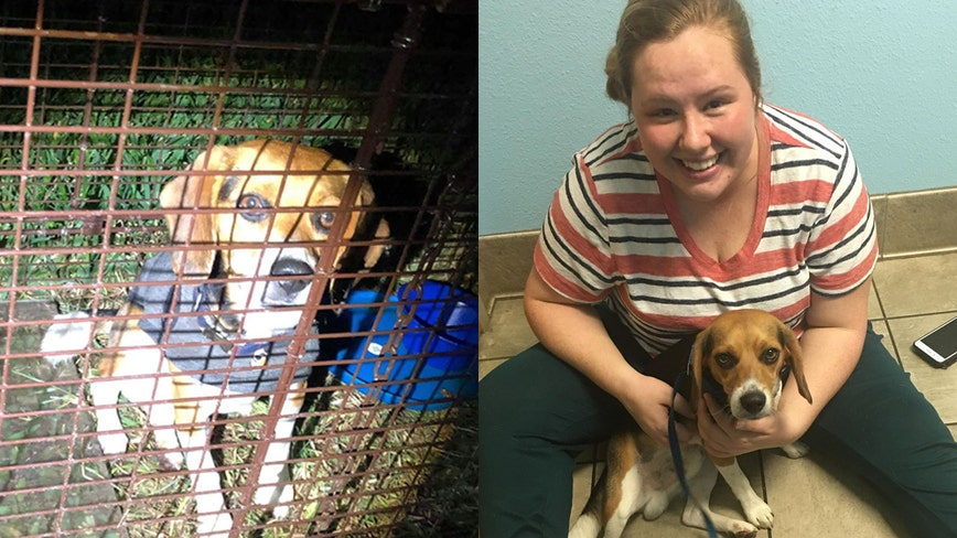 Missing dog returns home after weeks-long search thanks to Florida community