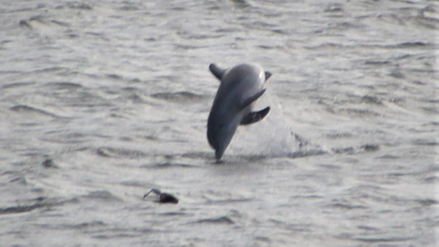 PHOTOS: Dolphin spotted jumping in water in Volusia County