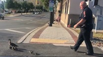 Lakeland officer escorts mama duck and 12 ducklings out of road, into lake