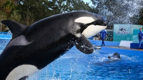 SeaWorld visitor steals wallets from Make-A-Wish guests