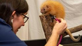 Disney's Animal Kingdom welcomes baby porcupine