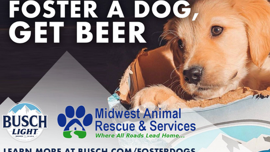 Busch to give '3 months' of beer to people that adopt or foster a dog during coronavirus pandemic