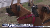 Can your pet get COVID-19?