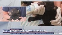 Wild Wednesday: Baby bear