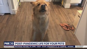 Post-pandemic life for your pets could be anxiety-ridden