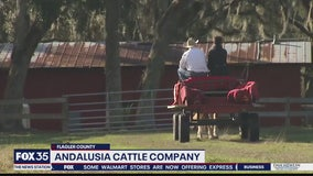 David Does It: Andalusia Cattle Company