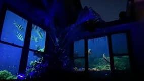 Family turns home into aquarium for grandma with dementia