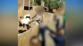 Local petting zoo employee fired after video of goat tossing surfaces