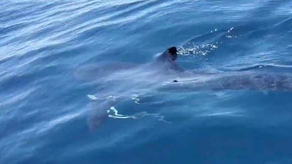 Shark attacks teen surfer at Florida beach in chilling video
