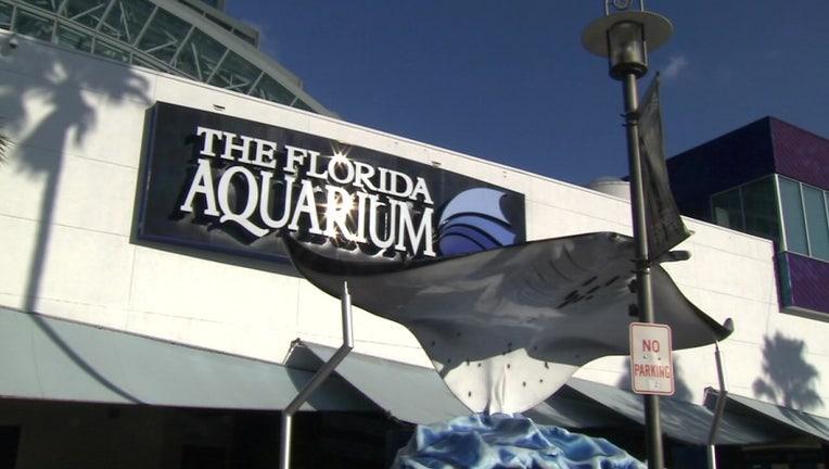 d08e6c89-florida aquarium