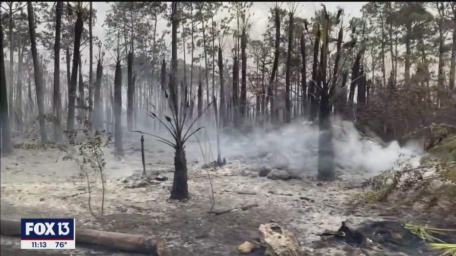 collier-fires1.jpg