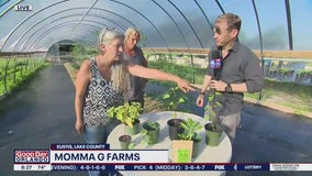 David Does It: Momma G Farms