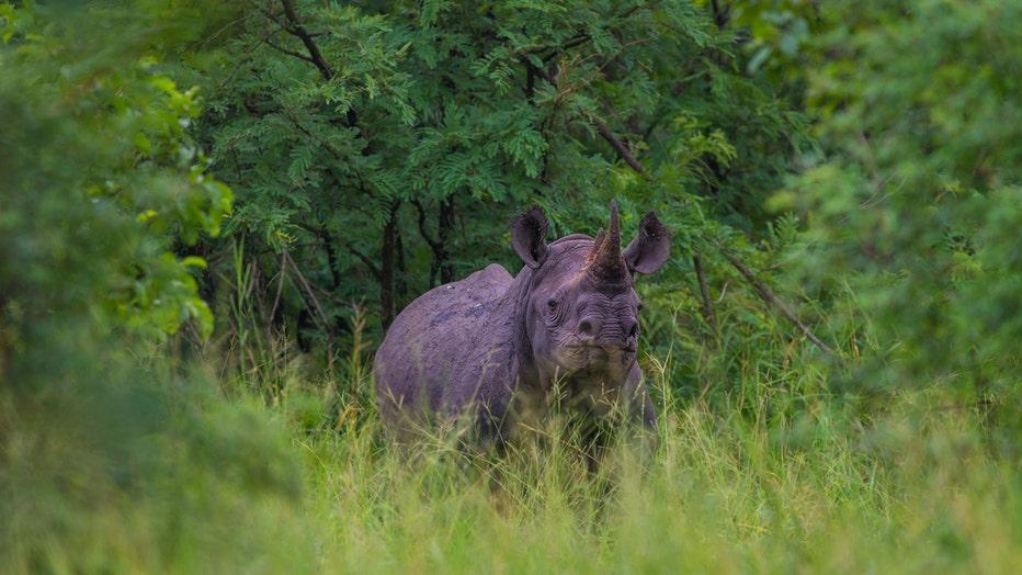 African_Parks_Majete_Rhino.jpg