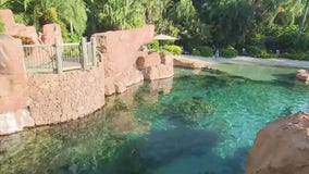 Discovery Cove welcomes Florida residents back with new offer