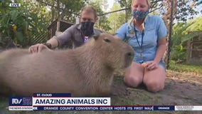 David Does It: Amazing Animals