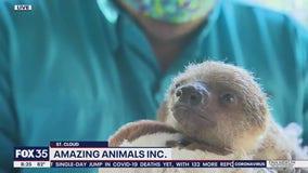 David Does It: Baby sloth