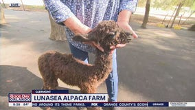 David Does It: Lunasea Alpaca Farm